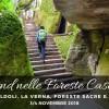 FORESTE CASENTINESI: CAMALDOLI, LA VERNA E SPA | 3-4 NOVEMBRE 2018