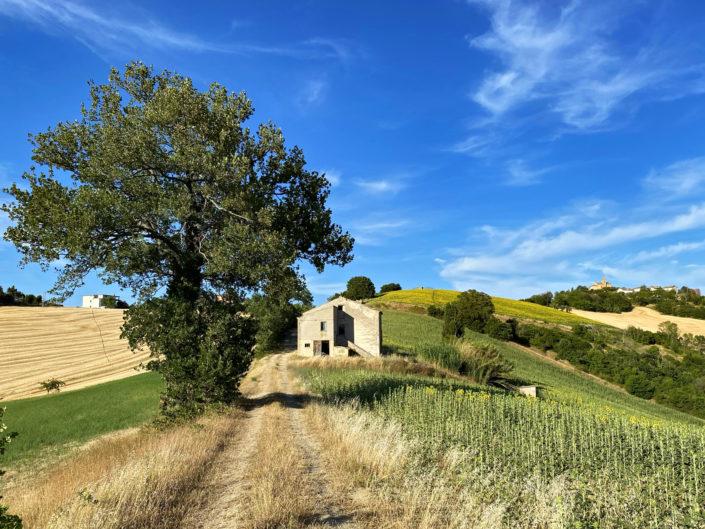 Tramonto a Monte Rinaldo (FM) | 18 Luglio 2021