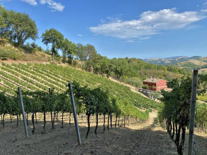 Orizzonte DiVino – Monte Rinaldo | 5 settembre 2021